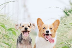 Keeping Your Pet Cool During Summer
